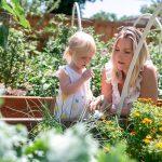 Denver Urban Gardening Consultant