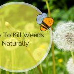How To Kill Weeds Naturally In Your Yard