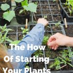 Starting Your Spring Seeds