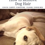 HOW TO REMOVE DOG HAIR