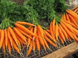 Carrots: Most Nutritious Vegetables