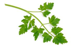Parsley: Most Nutritious Vegetables
